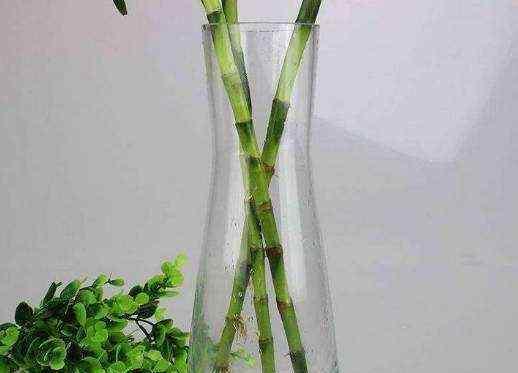 富贵竹几天换一次水 富贵竹寓意好 家里都喜欢说水培几棵 平日换水频率该怎么控制